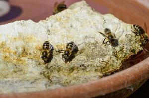 jak vyrobit pítko pro hmyz