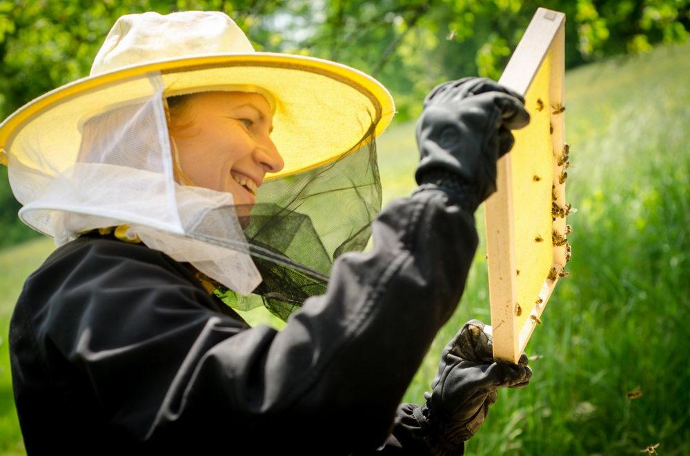 včelaření, kontrola včelstva, Pleva