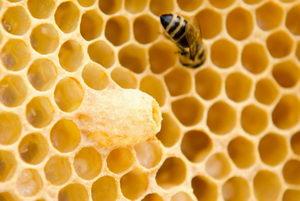včely v září