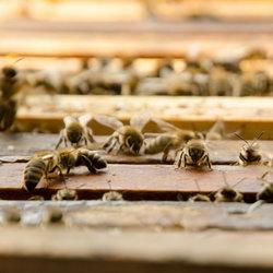 včelky-odpařování-křídla