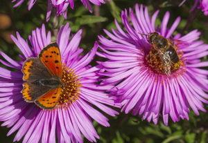 motýl a vosa na květině, záchrana hmyzu, šetrné zemědělství