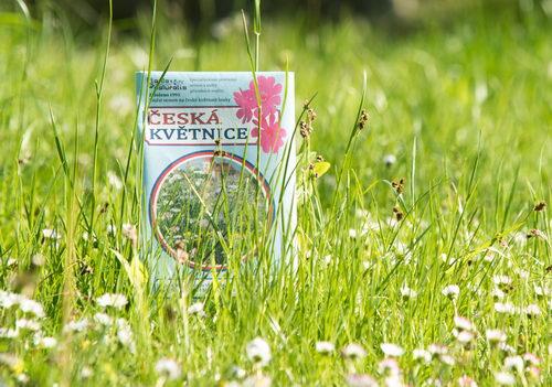 Trvalky pro včely, kvetoucí louka, semínka medonosných rostlin