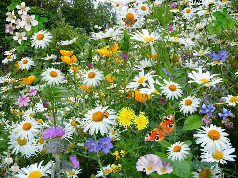 kvetoucí louka, rozkvetlá zahrada, pomoc hmyzu