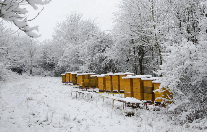 včelí úly Pleva