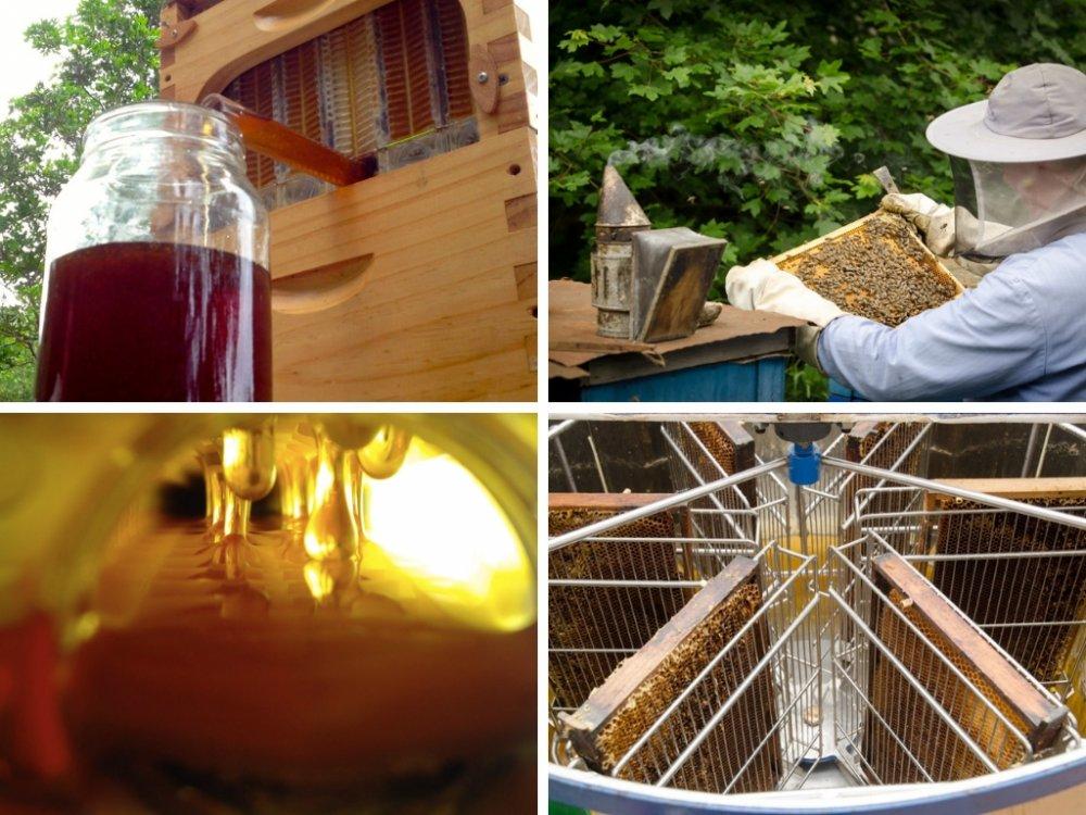 flow hive vs. tradiční medobraní Potštejn, Pleva