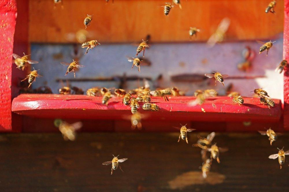 včely v březnu