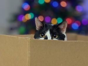 ekologické Vánoce, Vánoce a odpady