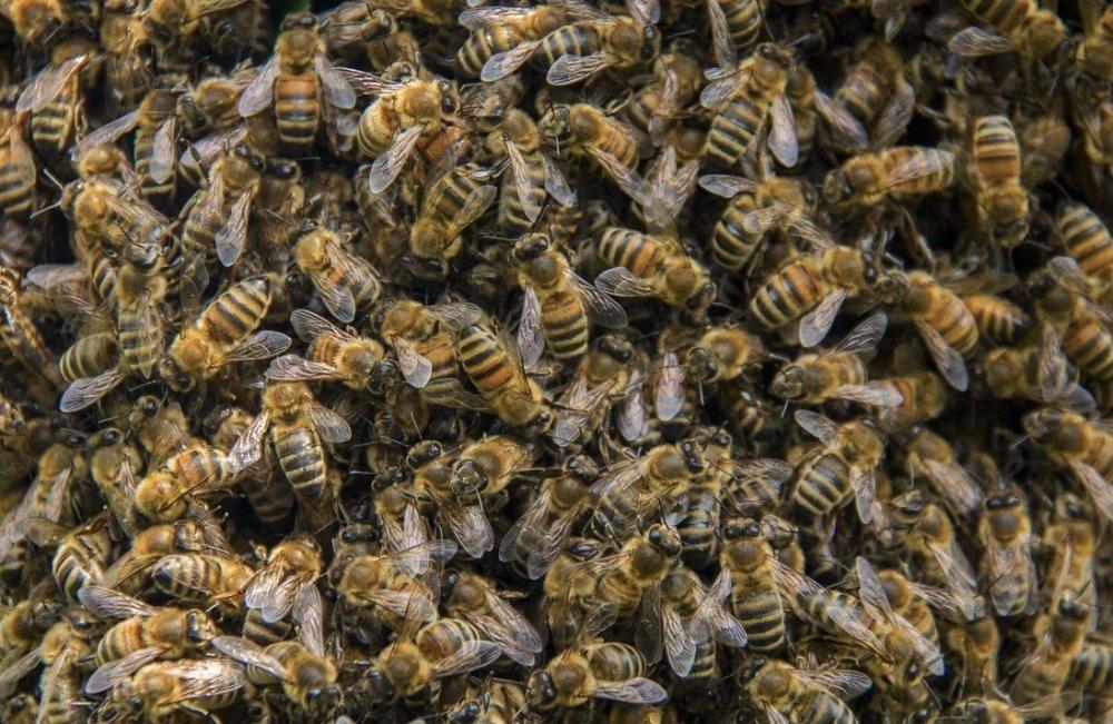včely v zimních chomáči