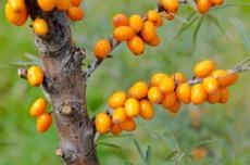 Kakaové boby v medu pleva pohled shora