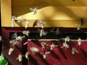Včelky při práci