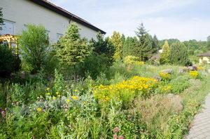 kvetoucí přírodní zahrada
