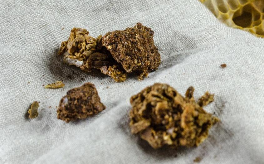 propolis na popáleniny, léčení popálenin propolisem