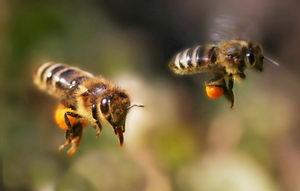 letící včely