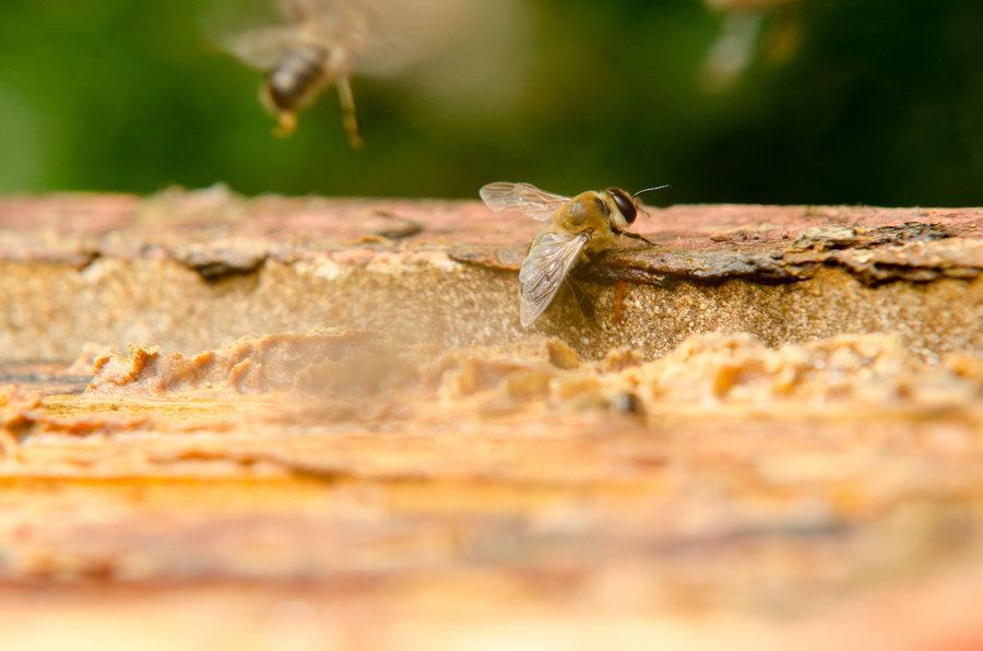 včelstvo potštejn pleva