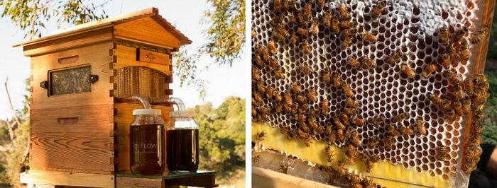 FlowHive a péče o včely