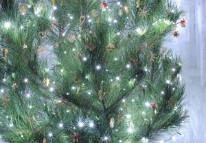 vánoce, ekologie, živý vánoční stromeček