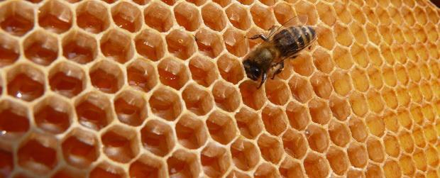 zdražení medu