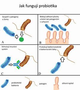 Ekzém, alergie a imunitní systém, probiotika, prebiotika - Pleva
