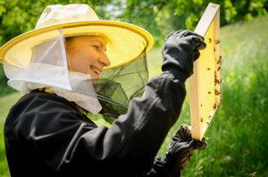 Flow Hive, včelaření, kontrola včelstva, Pleva