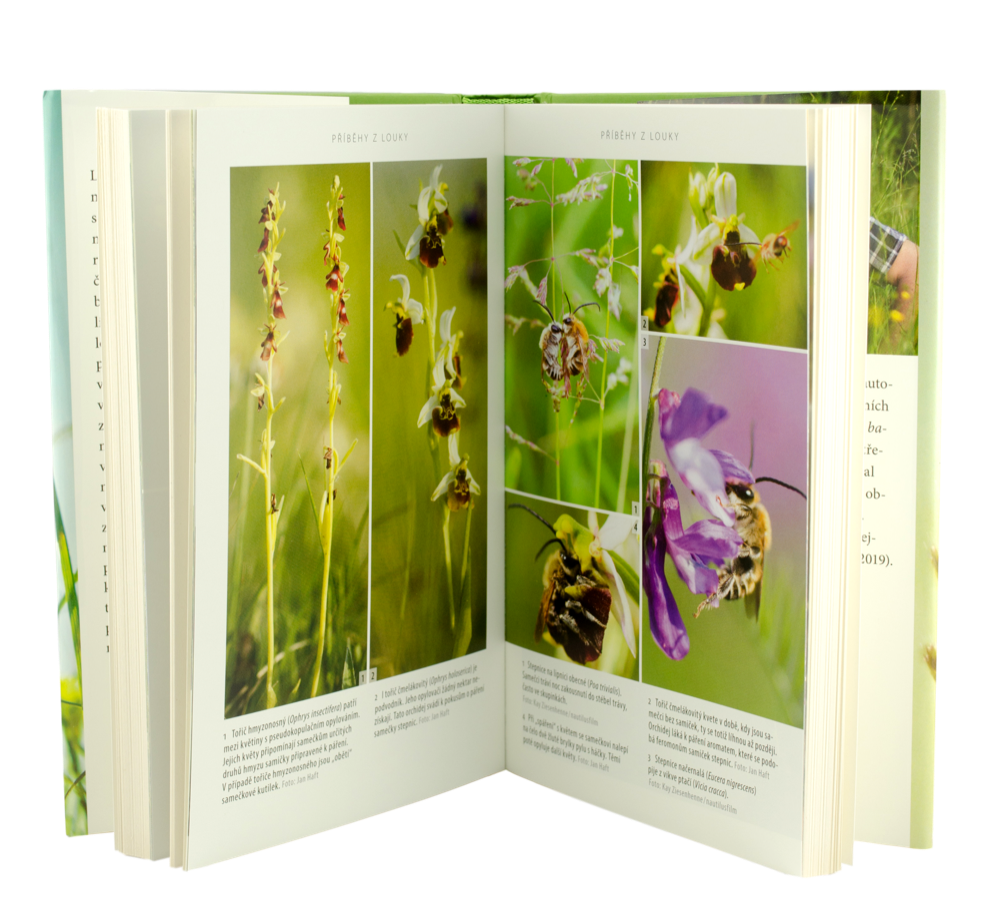 Kniha Louka, Jan Haft