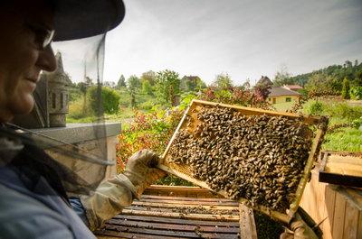 Včelař při kontrole úlu