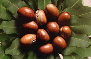 bambucké máslo v kosmetice, bambucké ořechy, karité, shea