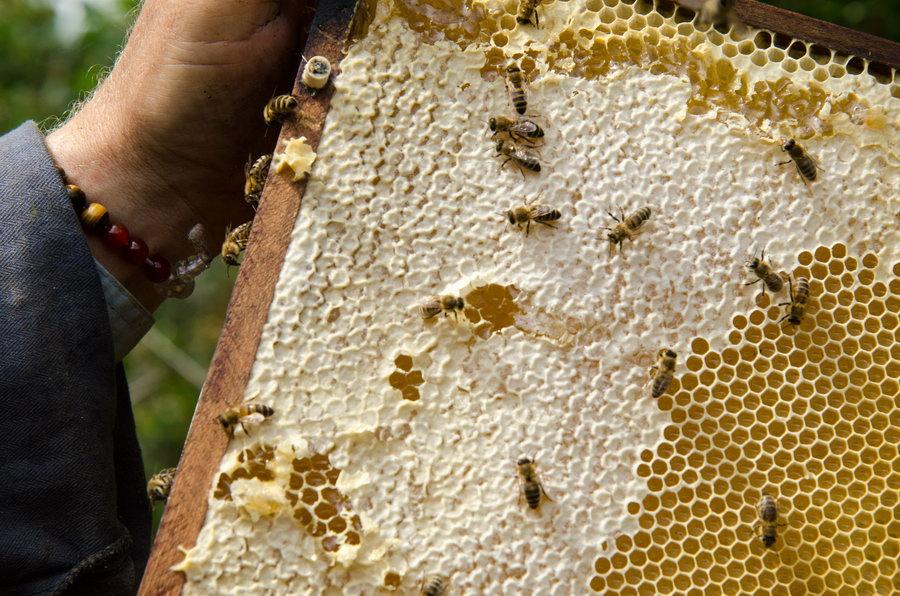 včely potštejn pleva