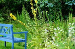 Přírodní rozkvetlá zahrada, Pleva