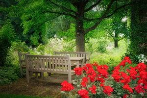 Posezení v přírodní kvetoucí zahradě