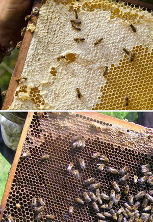 Využití včelích voskových plástů
