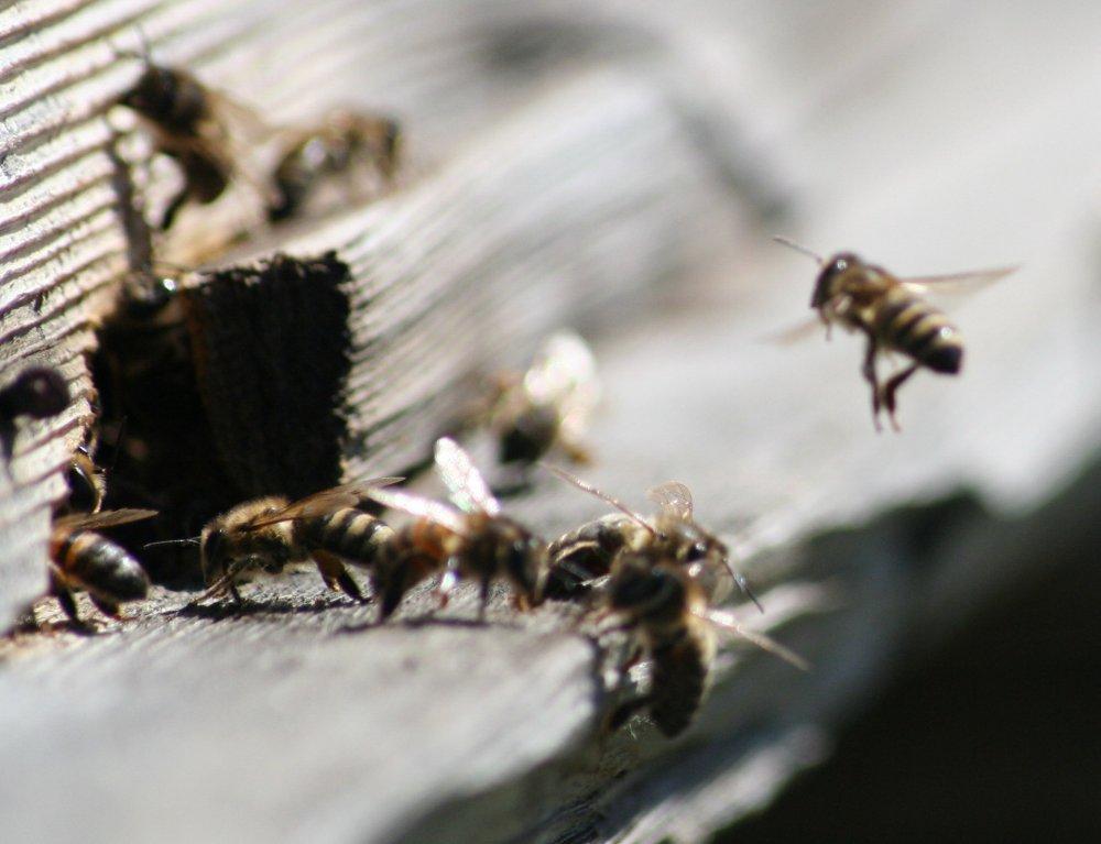 Wabi-sabi, přirozené stárnutí dřeva, včelí úl