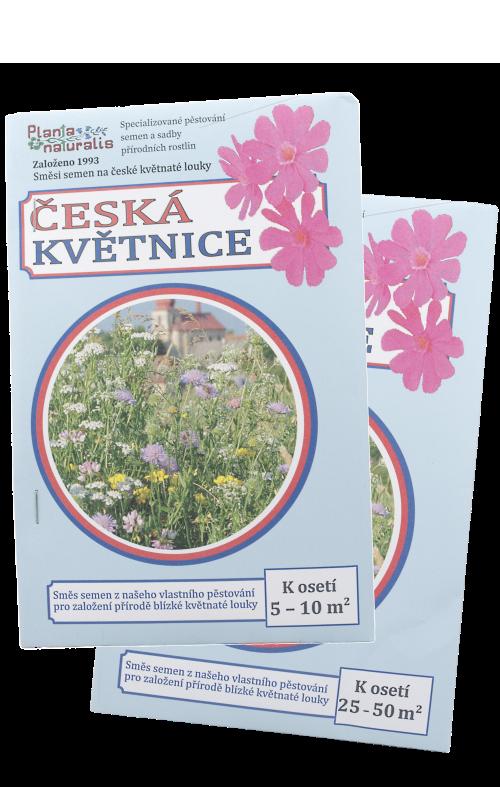 Osivo trvalek Česká květnice, nenáročná kvetoucí louka