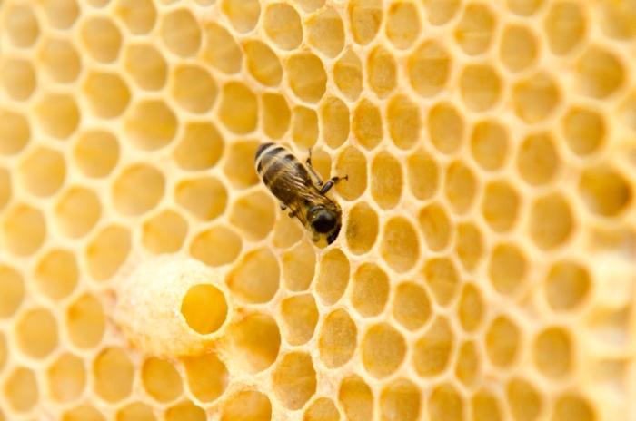 Jak vzniká včelí vosk